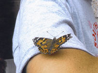 Release Butterfly at the 2010 Kidney Challenge